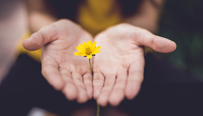 A pair of hands outstretched, holding a small yellow flower between them.